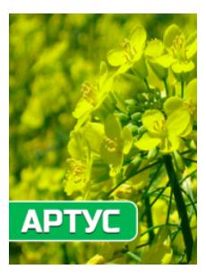 Семена озимого рапса Артус