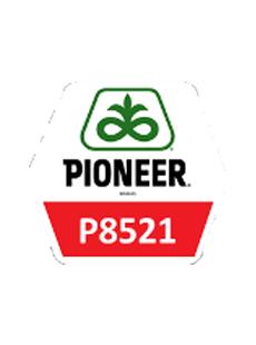 П8521/P8521