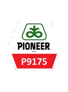 П9175/P9175