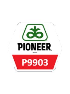 П9903/P9903 Форс Зеа