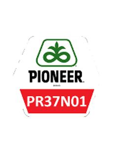 ПР37Н01/PR37N01
