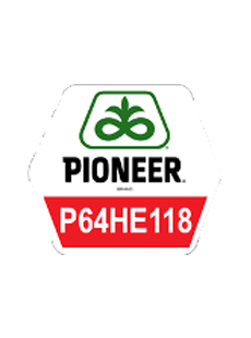 П64ГЕ118/P64HE118