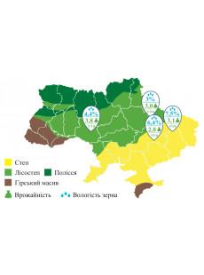 Семена подсолнечника ЕВРО