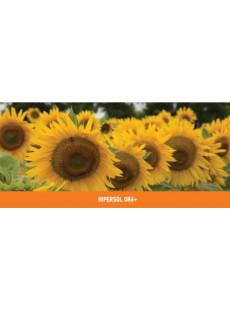 Насіння соняшнику Гіперсол CL+OR6