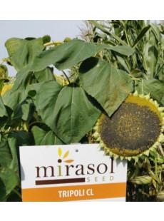 Семена подсолнечника Триполи CL+OR5
