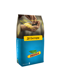 Семена рапса ДК Эксторм