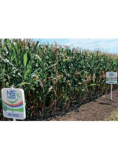 Насіння кукурудзи НС 2652