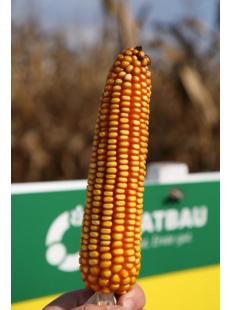 Семена кукурузы Контенто