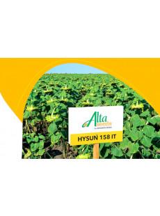 Семена подсолнечника Хайсан 158 ИТ